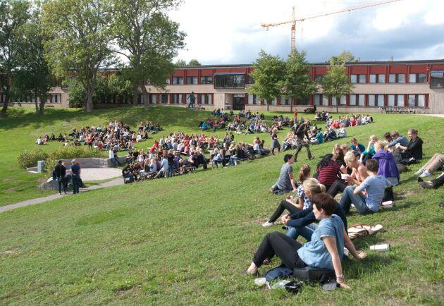 Nu närmar sig sista ansökningsdagen till vårens högskoleutbildningar. Här är studenter i gröngräset på SLU i Uppsala.