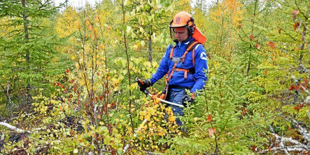 Test: Vilken typ av skogsägare är du?