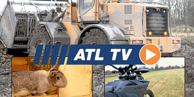 ATL TV: Ökat intresse för kaninkött