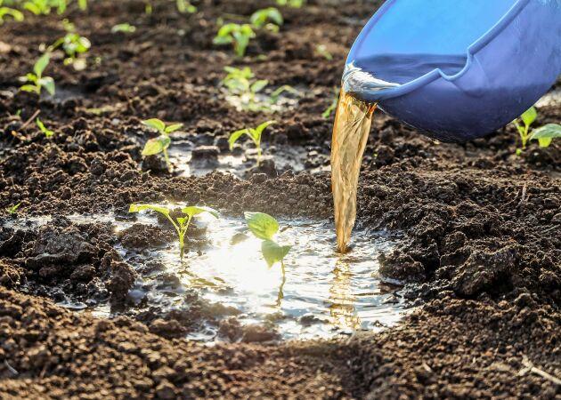 Ge odlingarna en kickstart – allt om gödsel & kompost