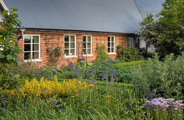 Längs gårdens västra sida, ligger den mer matnyttiga köksträdgården – men det är aldrig långt till de mer lustfyllda blomsterodlingarna. Närmast samsas olika gula och blålila nyanser med blanda annat praktlysing, rudbeckia, bolltistel och aster.
