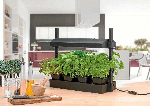 En odlingslåda med inbyggd belysning och vattenmagasin, perfekt för köksbänksodling.
