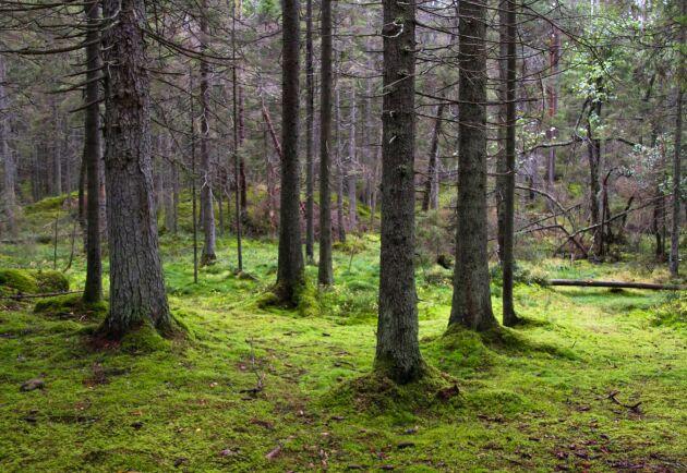 Norra Skogsägarna vill ta med miljöministern ut i skogen.