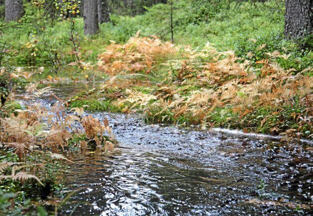 Skogsbäck i nyckelbiotop i nordvästra Dalarna.