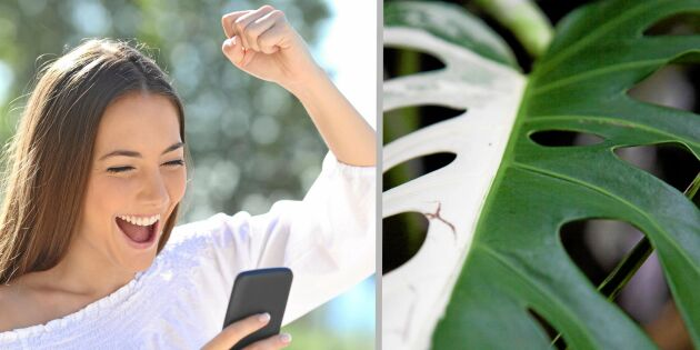 Sticklingar hett byte – här är dyraste plantan på auktion