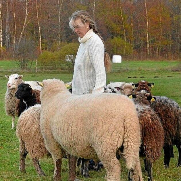 Fåret Lasse stöttes bort som liten och växte upp med två hundpappor i Ingela Olrup Larsen och maken Jörgen Larsens hus.