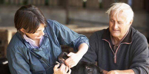 Ny forskning: Lantbrukare bra på att hitta kärleken på jobbet
