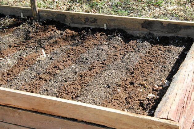 Om jordytan är grov kan du lägga ut planteringsjord där du ska så, då har fröna något att fästa i.