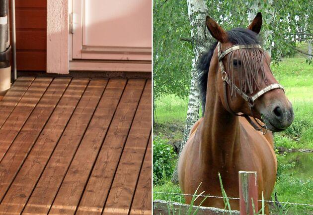 Det är fortfarande oklart hur hästen hamnade på verandan. Arkivbilder, hästen och verandan på bilderna har inget med händelsen att göra.