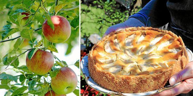 Äppelpaj med valnötter på krispig havrebotten