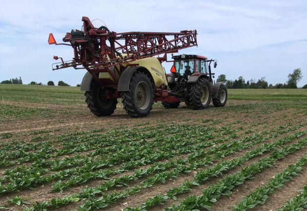 Danmark har en betydande produktion av spenatfrö. Troels Prior Larsen odlar själv grödan på sin gård.