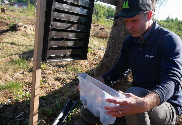 När antalet granbarkborrar i fällorna går ner betyder det att de hittat en gran att angripa. Därför är det snart dags att gå ut och se till sin skog, menar Mårten Gustavsson.