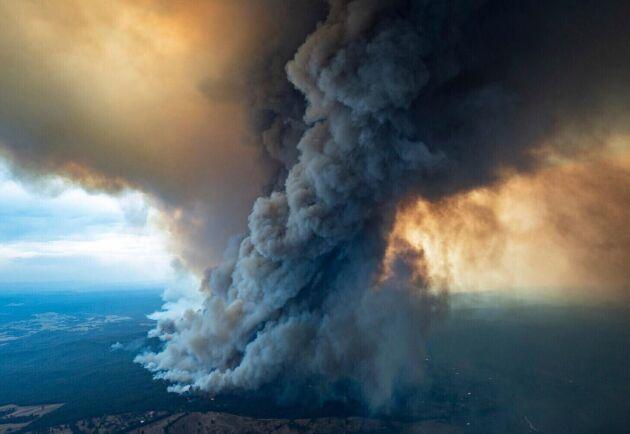 De värst drabbade områdena efter nyårsaftonsbränderna ligger i regionen East Gippsland i delstaten Victoria, samt i det populära kustområdet South Coast i New South Wales varifrån turister nu massevakueras.