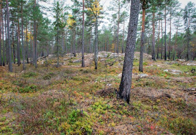 Skogsmark, tvinmark eller rent av impediment? Skillnader i definitioner gör det svårt att jämföra skogsskydd i Finland och Sverige.