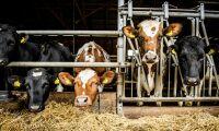 Utsläppen minskar i alla sektorer utom jordbruket