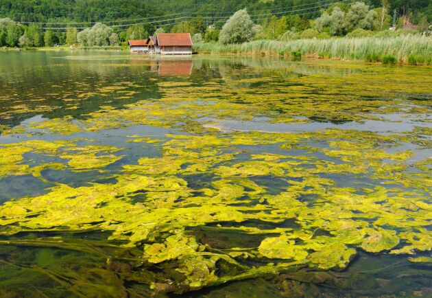 Samordnare och markägarna ska samarbeta i en unik satsning som innebär att man ska genomföra fler åtgärder mot övergödning i sjöar och hav på lokal nivå.