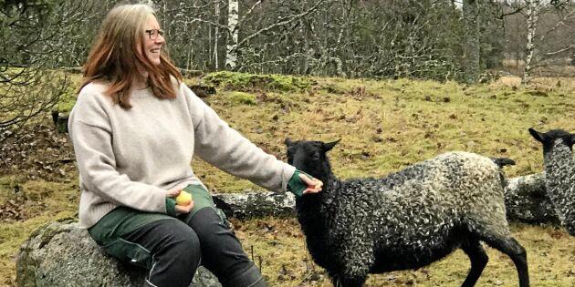 Nu får svensk ull en ny marknadsplats