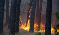 Brandfiltar kan skydda hus vid skogsbrand