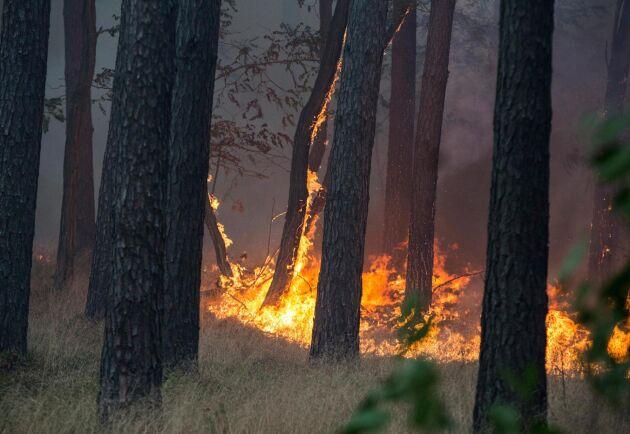 I framtiden kan kanske gigantiska brandfiltar skydda hus vid exempelvis skogsbränder. Arkivbild.