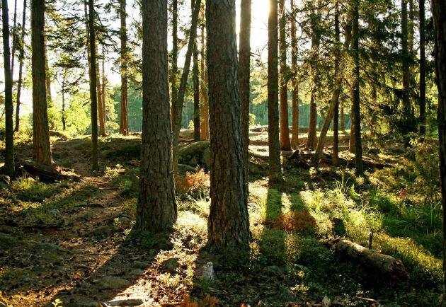 Skogsägaren Lennart Hellmont är missnöjd med en utdragen omarrondering av sin skogsmark.