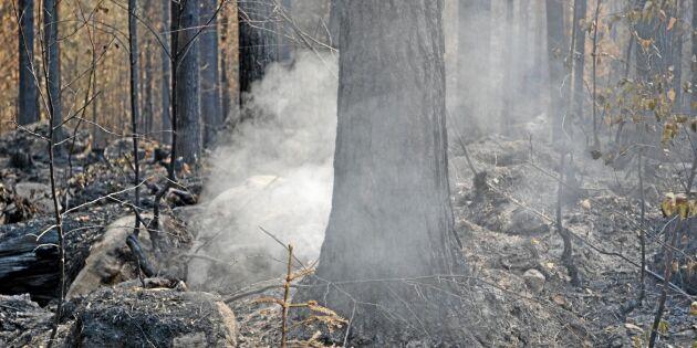 Bränder och skadegörare dyrt för försäkringsbolag