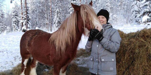 Grön omsorg: Ett hästjobb att lindra ångest