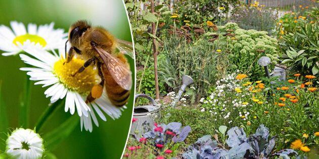 Blomstermixen som lockar insekterna till din trädgård