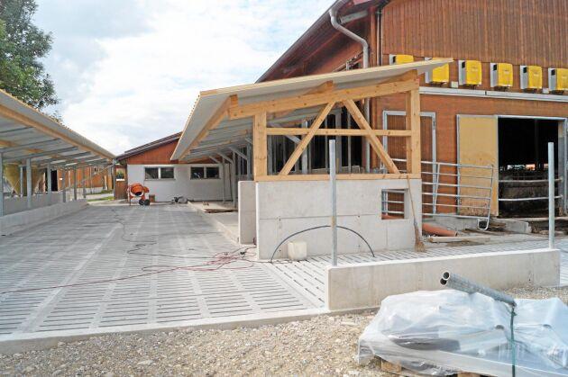 En uteplats håller på att färdigställas för korna. Här kan de utfodras utomhus och få tillgång till ännu friskare luft än inne i stallet.