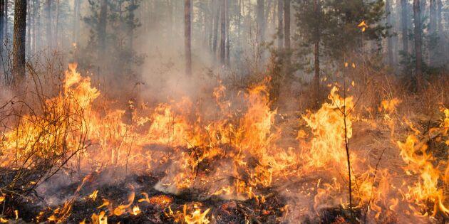 Extrem brandrisk i halva Sverige