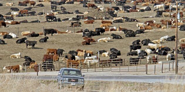 EU och USA överens om köttkvot