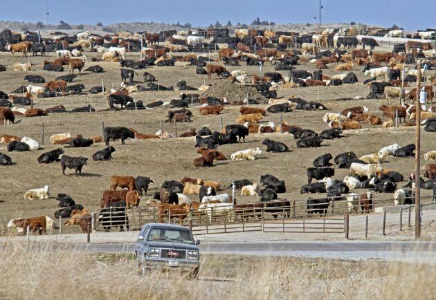 Köttboskap i den amerikanska delstaten Nebraska.