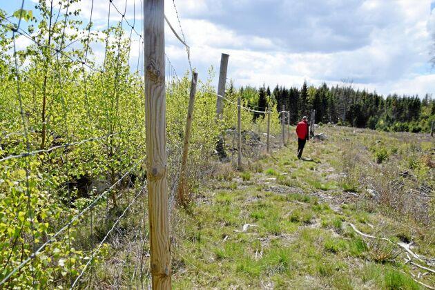 På gården finns för tillfället sex hägn med olika trädslag.