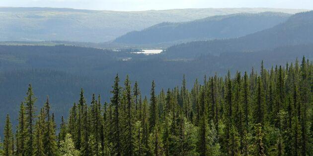 Skogsstyrelsen välkomnar prövningstillstånd