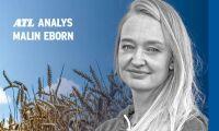 Ny skörd och starkare krona pressar spannmålspriserna