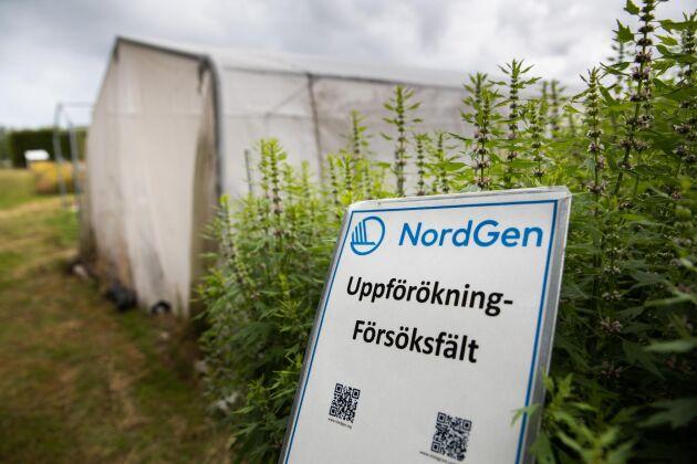 Nordgen är de nordiska ländernas gemensamma genbank. Huvudkontoret, och växtgenbanken, ligger i skånska Alnarp, granne med SLU.