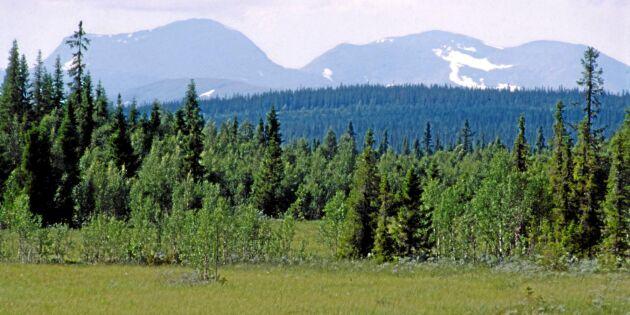 Nu ska första målen om fjällnära skog avgöras