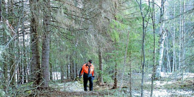 Utredning om ersättning i fjällnära skogar försenad igen