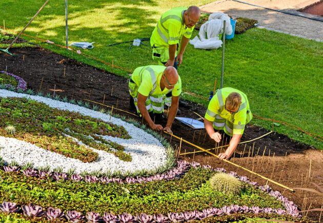 Trädgårdsarbetare är ett framtidsyrke enligt de senaste jobbprognoserna. Foto: Istock