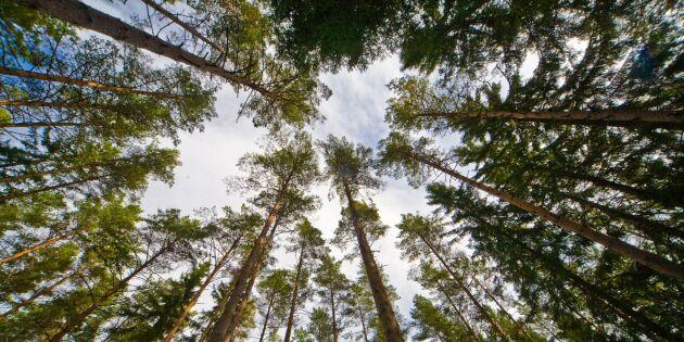 Inbromsning i skogen – tre bolag mot strömmen