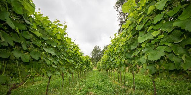 Riksdagsmajoritet för gårdsförsäljning med villkor