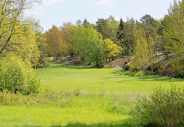 Skärgårdsbonde sökes till 30 hektar mark.