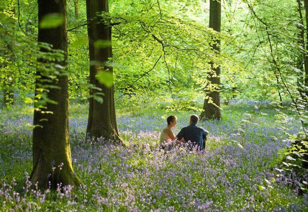 I naturen får hjärnan vila från störande intryck och hamnar i ett tillstånd liknande meditation.