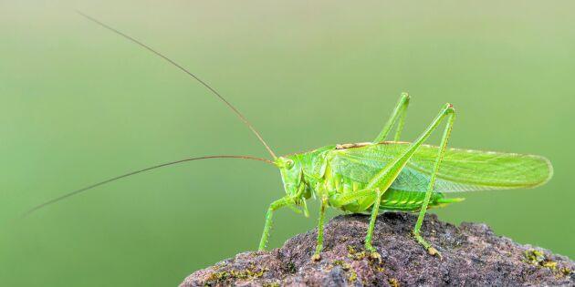 5000 arter av insekter fortfarande oupptäckta