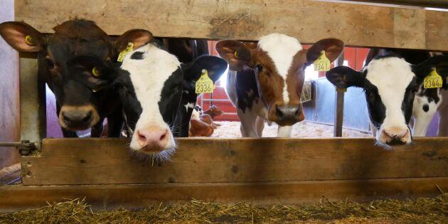 Utredningen om nya djurhälsolagen färdig