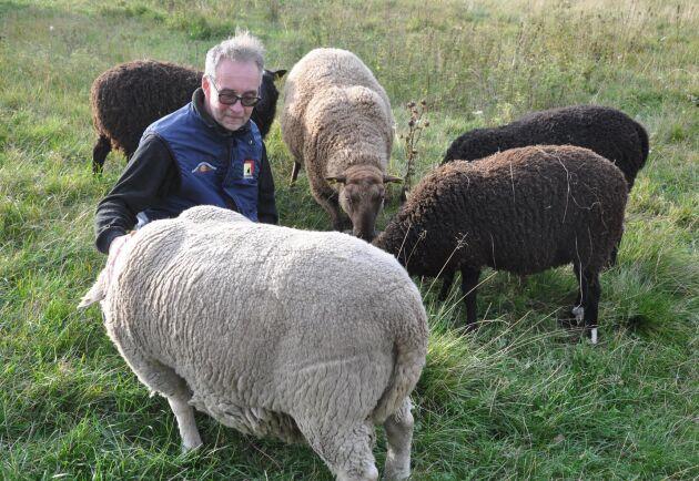 Ulf Ekholm är mycket kunnig inom fåravel, han är domare och har egna avelsbaggar. En avelsbagge som köptes för 32000 kronor dödades lodjuret vid attacken 2002.