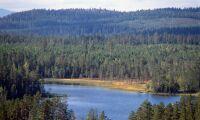 Flera nya skogsbolag efter delningen av Bergvik