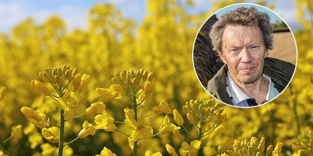 """""""Kommer svenska växtodlare att så rekordareal av vårraps?"""""""