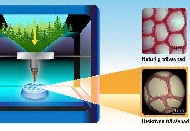 Med ett bläck av nanocellulosa och en printer som efterliknar träets unika ultrastruktur har Chalmersforskarna lyckats skriva ut träprodukter med en 3D-skrivare.