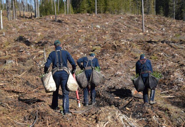 Plantering tillhör de uppgifter som kan ingå i de naturnära jobben.