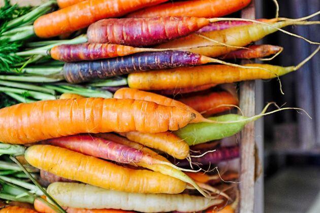 Morötter är en kär favorit i köket. Prova gärna olika sorter morötter som bjuder på en härlig färgkavalkad.